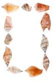 Pagina dei seashells Fotografia Stock
