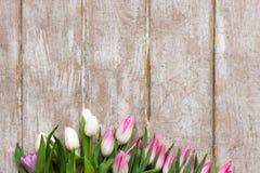 Pagina dei tulipani rosa su fondo di legno Fotografie Stock Libere da Diritti
