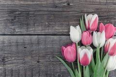 Pagina dei tulipani su fondo di legno rustico con lo spazio della copia per immagine stock
