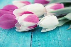 Pagina dei tulipani sul fondo di legno rustico del turchese Florida della primavera immagini stock