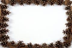 Pagina del cono del pino Fotografia Stock