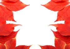 Pagina del fondo delle foglie di autunno con lo spazio della copia Fotografie Stock Libere da Diritti