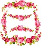 Pagina della rosa Fotografie Stock