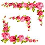 Pagina della rosa Fotografia Stock
