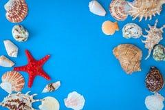 Pagina delle coperture di varia dimensione e delle stelle marine rosse Fotografia Stock