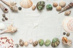 Pagina delle coperture e delle stelle marine Immagini Stock