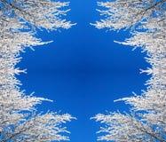 Pagina delle filiali della neve Fotografia Stock Libera da Diritti