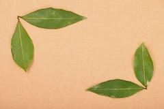 Pagina delle foglie della baia sulla carta kraft Immagine Stock