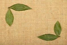 Pagina delle foglie della baia sulla tela di juta della tela da imballaggio Fotografia Stock