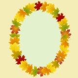 Pagina delle foglie di acero ovali Immagine Stock