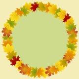 Pagina delle foglie di acero rotonde Fotografie Stock