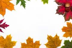 Pagina delle foglie di acero su un fondo bianco Fotografia Stock Libera da Diritti