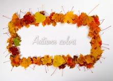 Pagina 1 delle foglie di autunno Immagini Stock Libere da Diritti