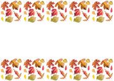 Pagina delle foglie di autunno, orizzontale Immagine Stock