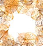 Pagina delle foglie di autunno di vettore Illustrazione Vettoriale
