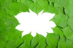 Pagina delle foglie di estate Immagine Stock