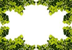 Pagina delle foglie di estate Fotografia Stock Libera da Diritti