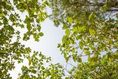 Pagina delle foglie e del cielo Fotografia Stock