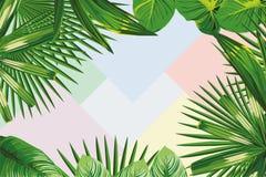 Pagina delle foglie tropicali Immagine Stock