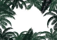 Pagina delle foglii di palma Fotografia Stock Libera da Diritti