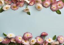 Pagina delle margherite bianche e rosa Immagine Stock