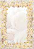 Pagina delle rose Immagini Stock
