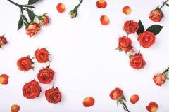 Pagina delle rose rosse su un fondo bianco Fotografia Stock