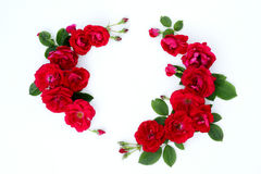 Pagina delle rose rosse su un fondo bianco con spazio per testo Immagini Stock