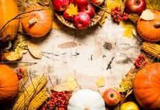 Pagina delle verdure e della frutta di autunno Immagine Stock
