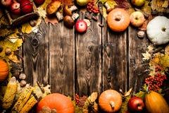 Pagina delle verdure e della frutta di autunno Fotografie Stock