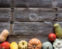 Pagina delle zucche e delle zucche differenti sopra legno, spazio della copia Fotografia Stock Libera da Diritti
