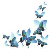 Pagina di belle farfalle e delle siluette blu isolate su fondo bianco Per la progettazione degli inviti di nozze, illustrazione vettoriale