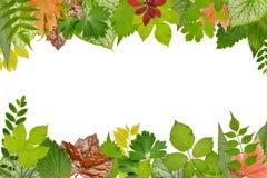 Pagina di varie foglie delle piante: erbe, cespugli ed alberi, erba Fotografia Stock