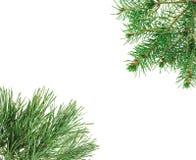 Pagina fatta con i ramoscelli del pino Fotografia Stock Libera da Diritti