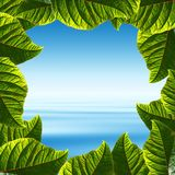Pagina fatta dei fogli verdi fotografia stock