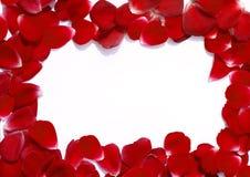 Pagina fatta dei petali di rosa Fotografia Stock Libera da Diritti