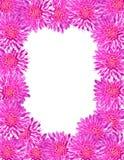 Pagina fatta del crisantemo Fotografia Stock