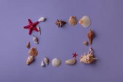 Pagina fatta delle conchiglie e delle stelle di mare Fotografia Stock Libera da Diritti