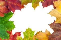 Pagina fatta delle foglie di acero di autunno Immagini Stock Libere da Diritti