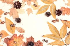Pagina fatta delle foglie di autunno, dei coni e delle ghiande secchi sul BAC della luce Immagine Stock