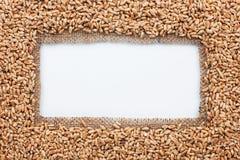 Pagina fatta di tela da imballaggio con grano Fotografia Stock Libera da Diritti