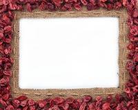 Pagina fatta di tela da imballaggio con i mirtilli rossi secchi Immagini Stock