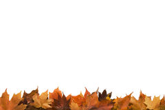 Pagina parziale delle foglie di autunno Fotografia Stock