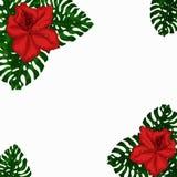 Pagina per testo da esotico, dalle foglie verdi dei fiori rossi dell'azalea e di Monstera Idea per il manifesto, cartolina, alett illustrazione di stock