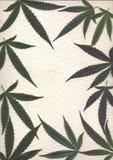 Pagina, ricerca delle foglie fresche dei telai di marijuanafor ed insegne Fotografia Stock Libera da Diritti