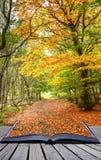 Pagina's van het het landschaps magische boek van de Daling van de herfst de bos Royalty-vrije Stock Fotografie