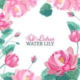 Pagina su fondo dei fiori di loto rosa immagini stock