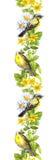 Pagina - uccelli, erbe del prato watercolor Banda senza cuciture d'annata del confine Immagine Stock