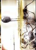 Paginación de Grunge con los elementos drenados mano Foto de archivo