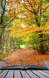 Paginaciones mágicas del libro del paisaje del bosque de la caída del otoño Fotografía de archivo libre de regalías